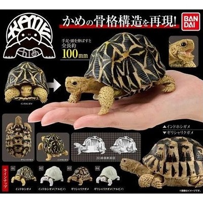 Turtle Complete Set of 4 (Gashapon) [Bandai]
